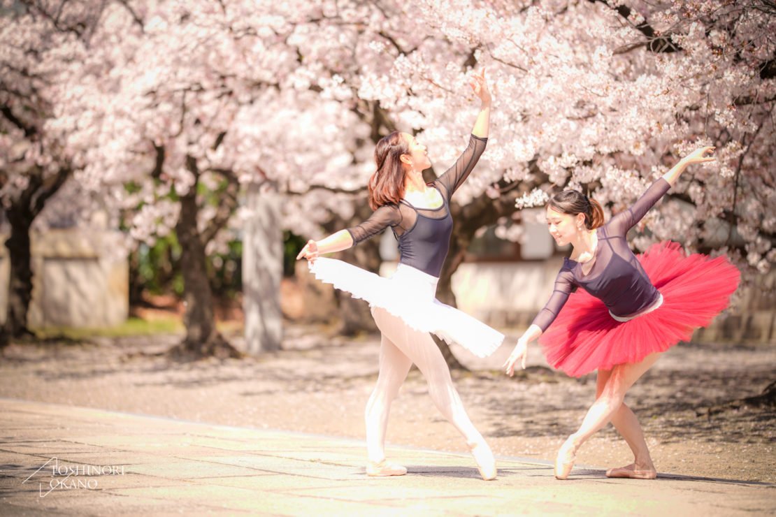photo 52 Cherry blossom and ballet