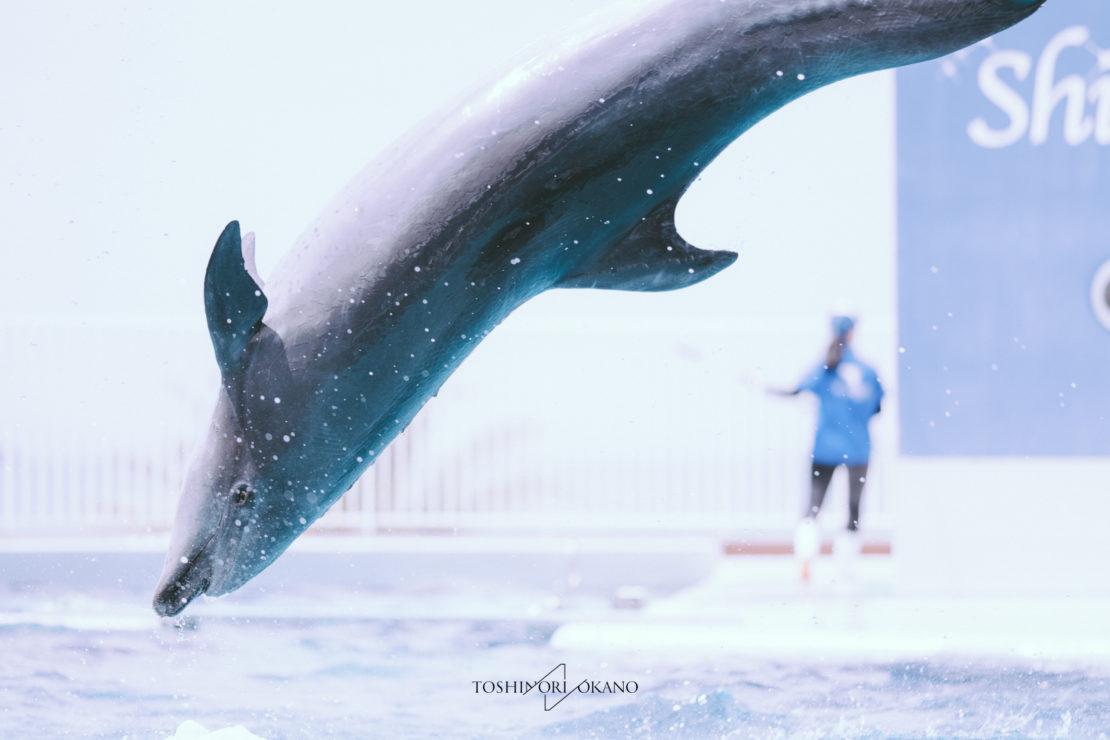 photo 54 dolphin