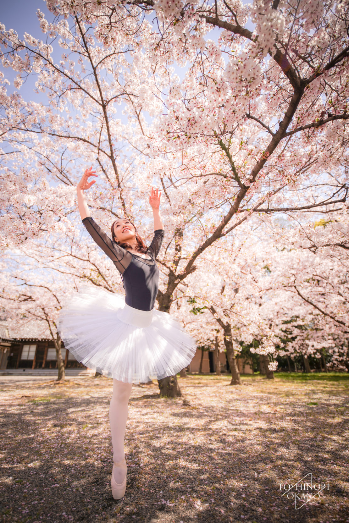 photo 48 Cherry blossom and ballet
