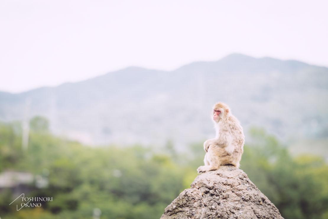 photo 53 monkey